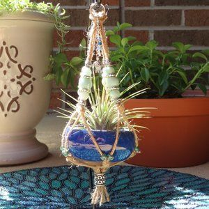 Mini Desktop Air Plant - Sea Turtle Charm